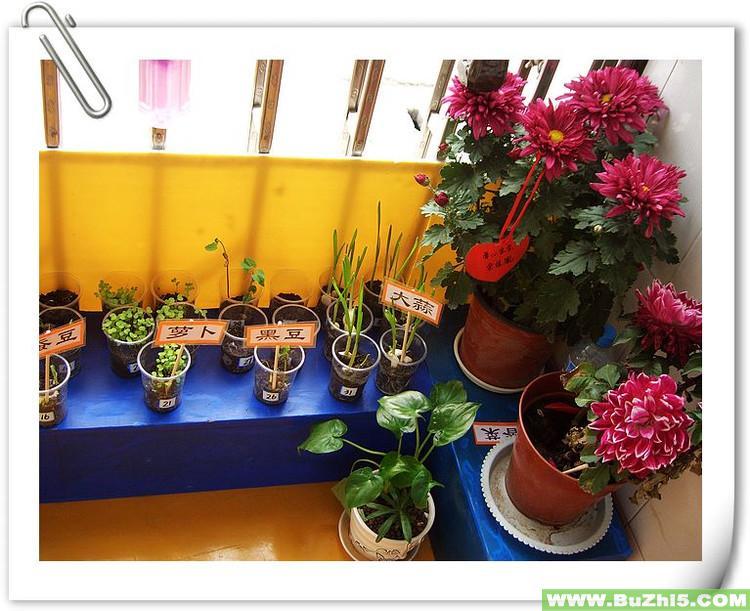 红花绿叶小班自然角布置图片