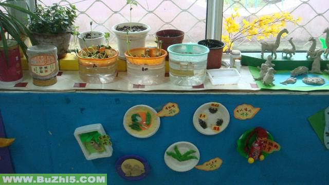 幼儿园植物角布置图片大全(第15页)