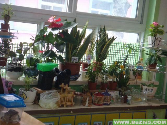 幼儿园自然角布置图片大全