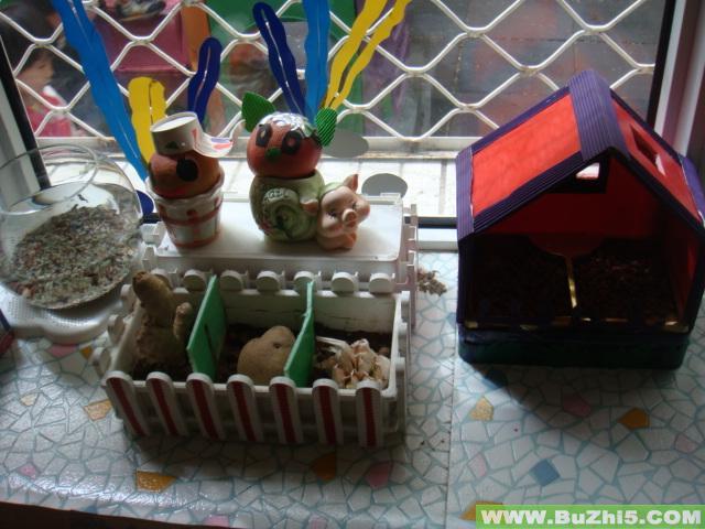 幼儿园小班自然角布置(第6页)