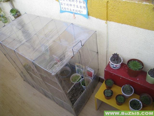 幼儿园自然角布置图片大全(第9页)