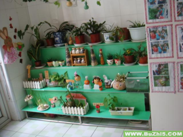 幼儿园植物角布置图片大全(第6页)