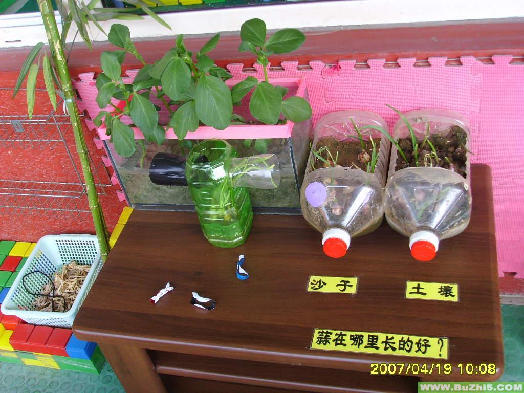 植物角环境自然角布置